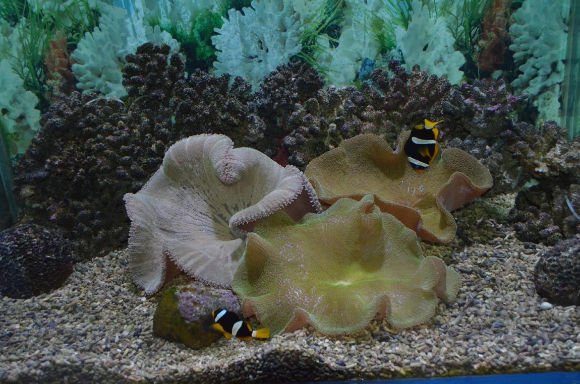 Океанариум в Астане. Фото, Отзывы.