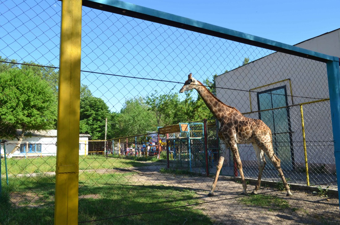 Зоопарк в шымкенте. Фото, Отзывы